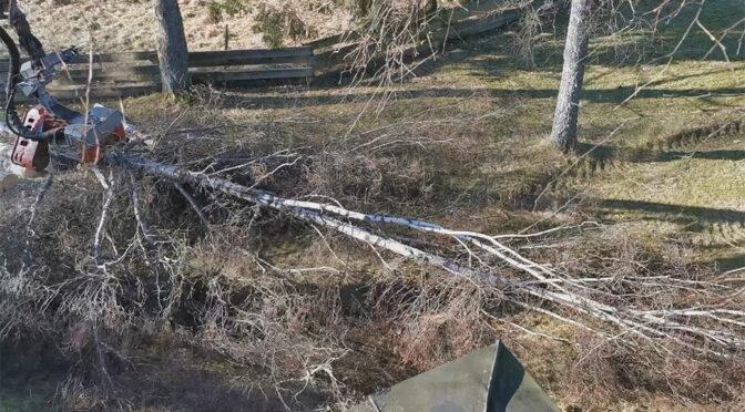 2021-03 Baumfällung auf Soläng